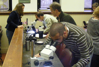 looking at pests under a microscope