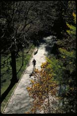 Thumbnail photo of people walking in a nature setting